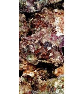 Aito elävä kivi - Karibian meri - Wild Rock