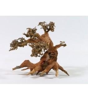 Aqua Bonsaipuu S