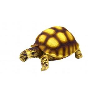 Hobby Turtle 2, 10 x 5 x 6,5 cm