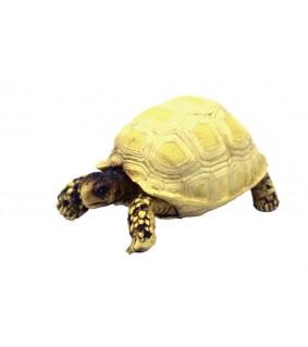 Hobby Turtle 3, 10 x 5 x 6,5 cm