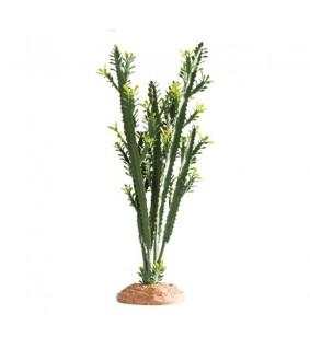 Hobby Euphorbia L