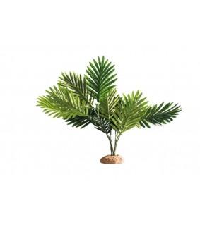 Hobby Palm