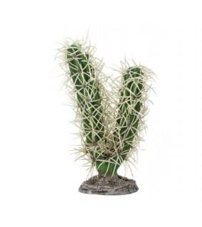 Hobby Cactus Simpson