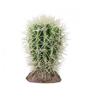 Hobby Cactus Great Basin