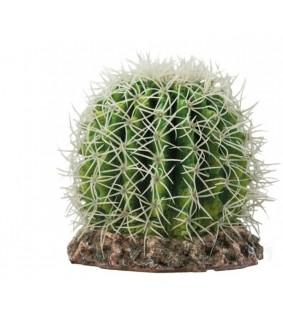 Hobby Cactus Sonora M
