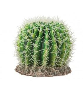 Hobby Cactus Sonora L
