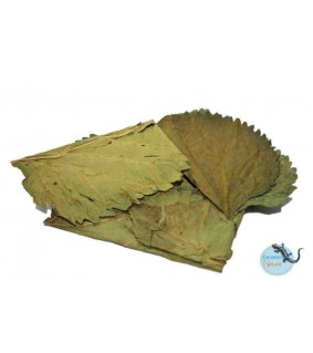 CeramicNature Mulberry leaves 10x packed