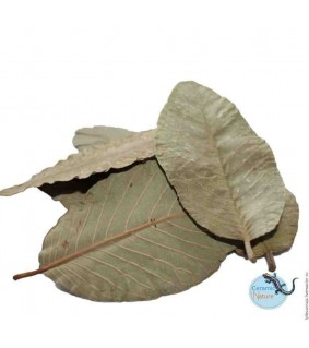 CeramicNature Guava leaves 15x packed