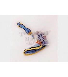 Various spp. - Slug - Coloured