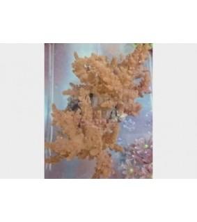 Scleronephthya spp. - Bush Coral - Yellow