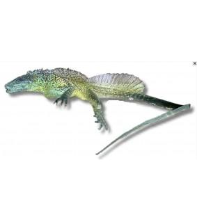 Hydrosaurus weberi M