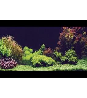 Aquatic Nature AQ SILENCE 100 X 50 CM