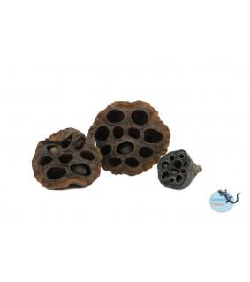 CeramicNature Lotus pods