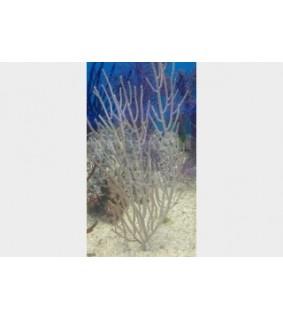 Muricea sp. - Tree Gorgonia - Silver
