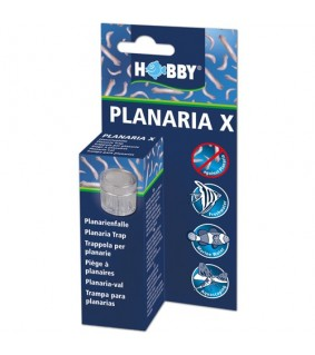 Hobby Planaria X Planaria trap, s.s.