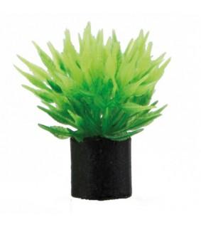 Hobby Utricularia mini, ss