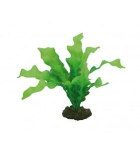 Hobby Echinodrus 20 cm