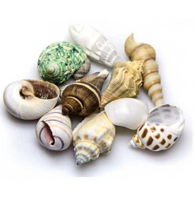 Hobby Sea Shells Set M 10 pcs., s.s.