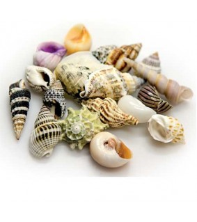 Hobby Sea Shells Set S 20 pcs., s.s.