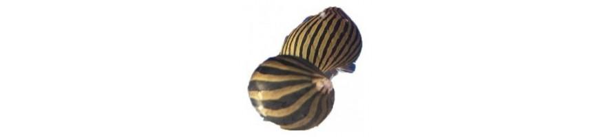 Muut vesieläimet esimerkiksi kotilot ja ravut akvaarioon