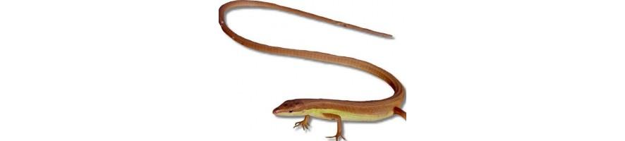terraarioeläin