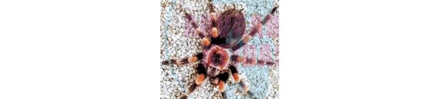 hämähäkki skorpioni
