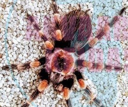 Hämähäkit ja skorpionit
