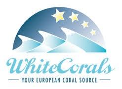 WhiteCorals korallit